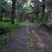 Se vende una Finca con plantas de Palma Africana