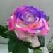 flores tinturadas