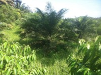 fincas en Quinindé